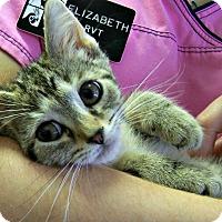 Adopt A Pet :: Gimli - Toledo, OH