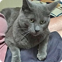 Adopt A Pet :: Pushka - Davis, CA