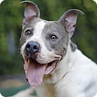 Adopt A Pet :: Al - Port Washington, NY