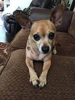 Chihuahua Mix Dog for adoption in McDonough, Georgia - Ozzy