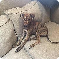 Adopt A Pet :: Johnny - Tucson, AZ