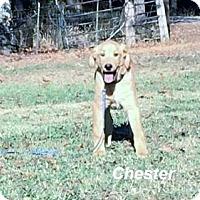 Adopt A Pet :: Chester meet me 12/2 - Manchester, CT
