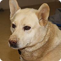 Adopt A Pet :: Charlie (Neutered) - Marietta, OH