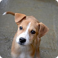 Adopt A Pet :: Zosha - Morristown, NJ