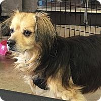 Adopt A Pet :: Fonzy - Irvine, CA