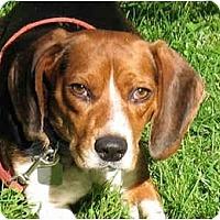 Adopt A Pet :: Luke - Blairstown, NJ