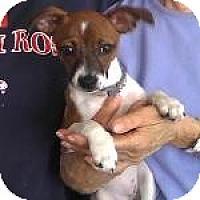 Adopt A Pet :: Sheba - Houston, TX