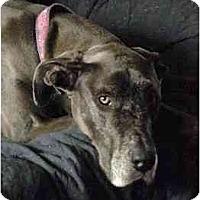 Adopt A Pet :: NIKITA - Pearl River, NY