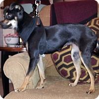 Adopt A Pet :: Cleo - McLoud, OK