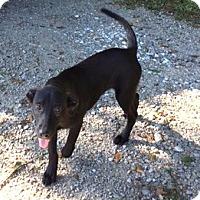 Adopt A Pet :: TOBIAS - sweetest boy around - Stamford, CT