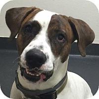 Adopt A Pet :: Gus Gus - Ithaca, NY