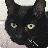 Adopt A Pet :: Beauty - Clayville, RI