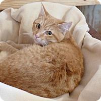 Adopt A Pet :: Garfield - Monterey, VA