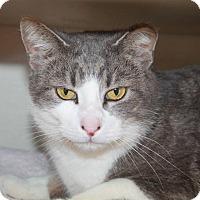 Adopt A Pet :: Lotto - Butner, NC