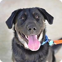 Adopt A Pet :: Genius - Dalton, GA