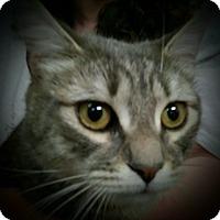 Adopt A Pet :: Diesel - Trevose, PA