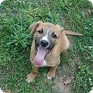 Adopt A Pet :: Leon