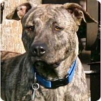 Adopt A Pet :: DIXIE - Houston, TX