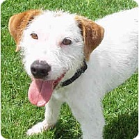 Adopt A Pet :: GUNNER - Phoenix, AZ