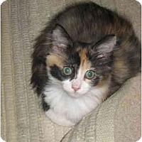 Adopt A Pet :: Jill - Davis, CA
