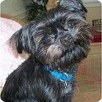 Adopt A Pet :: T-Tiny - ADOPTION PENDING - Jackson, MS