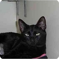 Adopt A Pet :: Becky - Lombard, IL