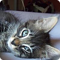 Adopt A Pet :: Bran - Orinda, CA