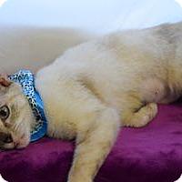 Adopt A Pet :: Kathy - Colorado Springs, CO