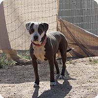 Adopt A Pet :: Noel - Toluca Lake, CA