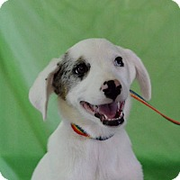 Adopt A Pet :: Tuff - Bedminster, NJ