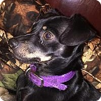 Adopt A Pet :: Boomer - Huntingburg, IN