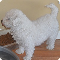 Adopt A Pet :: Willow - Prole, IA