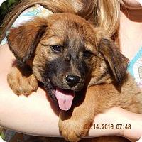 Adopt A Pet :: Haven (12 lb) - SUSSEX, NJ