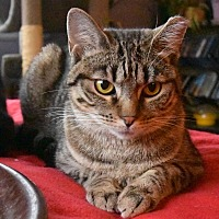Adopt A Pet :: Aloha - New  York City, NY