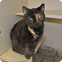 Adopt A Pet :: Netty - Suwanee, GA
