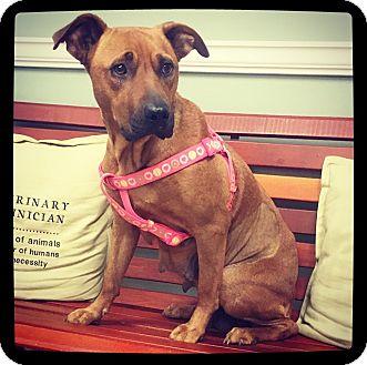 Labrador Retriever/Black Mouth Cur Mix Dog for adoption in Grand Bay, Alabama - Jessa