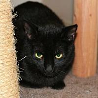 Adopt A Pet :: Ayden - Cary, NC