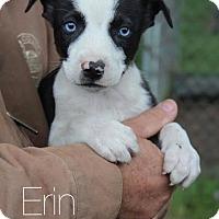 Adopt A Pet :: Erin - no longer accepting app - Manchester, NH