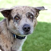 Adopt A Pet :: Hercules - Manchester, NH