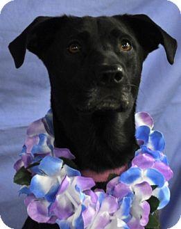 Labrador Retriever Mix Dog for adoption in Lockhart, Texas - Journey