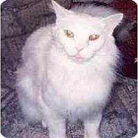 Adopt A Pet :: Nanuk - Clementon, NJ