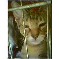Adopt A Pet :: Petsmart Mia - Owasso, OK
