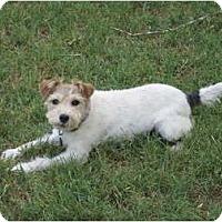 Adopt A Pet :: McKenna in Richmond - Houston, TX
