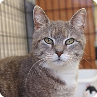Adopt A Pet :: Victoria - Ocean City, NJ