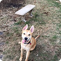 Adopt A Pet :: Bowie(fostered in PA) - Cranston, RI