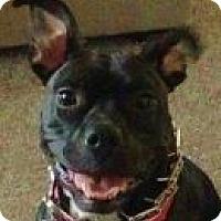 Adopt A Pet :: Layla - Medford, MA