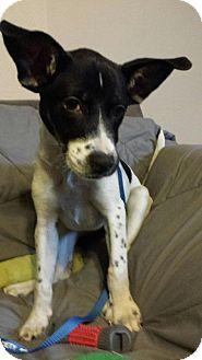 Boxer/Retriever (Unknown Type) Mix Dog for adoption in Olympia, Washington - Joy