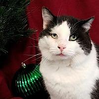 Adopt A Pet :: Trevor - Colfax, IA