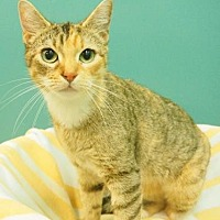 Adopt A Pet :: Catalie Portman - New Orleans, LA