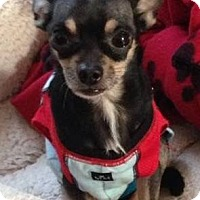 Adopt A Pet :: Christian - Matthews, NC